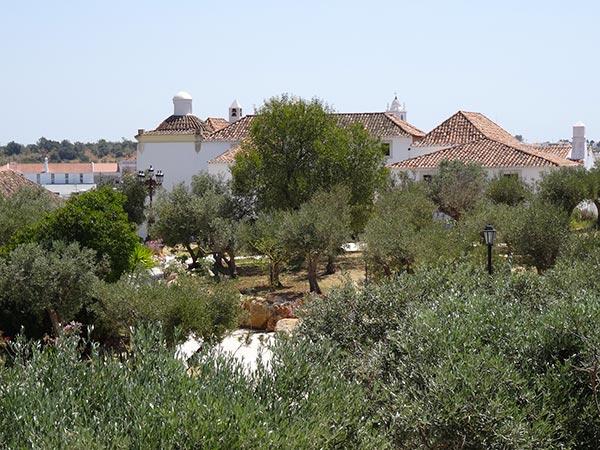 Maison entourée d'oliviers