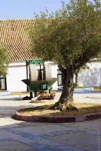 La Fabrique d'huile d'olive
